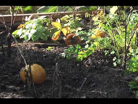 Farm to School Takes Root in B.C (Video Journalism Story).mov