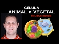 Célula Animal x Célula Vegetal