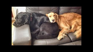 💗Aww Cute meme Animals TRY NOT TO LAUGH & AWWW - Cute dogs videos funny 💗 #124