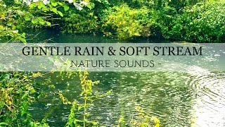 Gentle Rain & Soft Stream Sound on the Forest - Sleep Nature Sounds