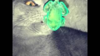 Нельзя котам давать лизуна !😅