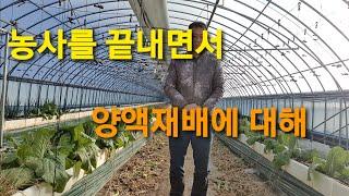 하우스양액재배 농사를 마무리 하고. 앞으로 양액재배는 …
