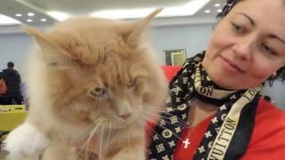 Харьков.Международная  Выставка кошек 2017. Часть 2.   Kharkiv. Cat Show 2017 Part 2.
