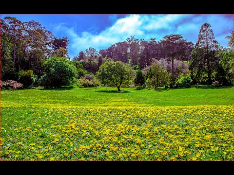 Visiting Golden Gate Park, Park in San Francisco, California, United States