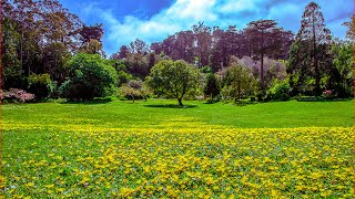 Visiting Golden Gate Park, Park in San Francisco, California, United States