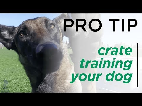 The Benefits of Crate Training Your Dog