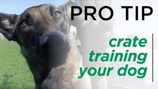 The Benefits of Crate Training Your Dog - BBB Pro Tips