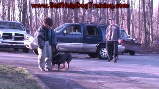 Rottweiler Personal Protection Training (k9-1.com)