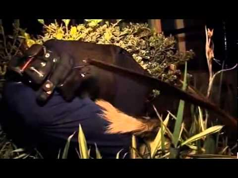 Send In The Dogs UK Episode 3 The Metropolitian Police,