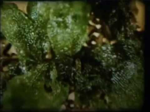 Размножение многоклеточных организмов. Научфильм (учебное видео СССР)
