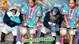 To funny.....Chimpanzee undress dance