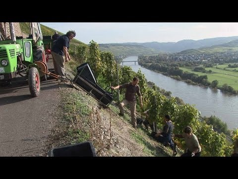 Vineyard Rainer Heil, Brauneberg - Germany HD Travel Channel
