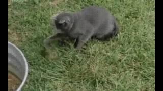 Кошка которая не понимает что происходит