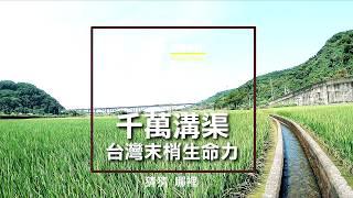 陽光綠稻的治癒時刻  - 美景系列