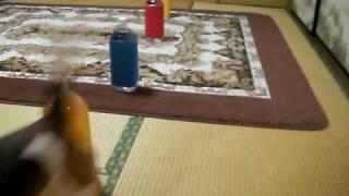 室内でペットボトルを使ってスラロームの練習してみました。 簡単にでき...