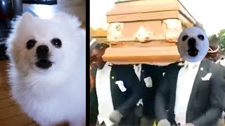 Coffin Dance Meme  Gabe the dog version