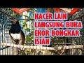 Dijamin Kacer Langsung Gacor Bukor Kacer Jadi Gacor Bongkar Isian Dengar Suara Kacer Ini  Mp3 - Mp4 Download