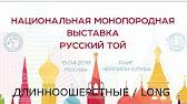 Русский Той терьер гладкошерстный Элегантный Русский Той - YouTube