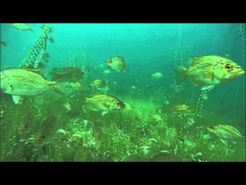 Higgins Lake Snorkeling - Underwater Fish Cam