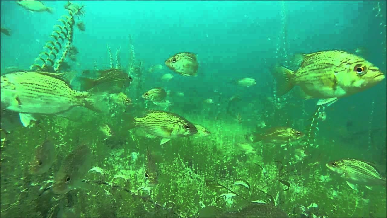 Higgins Lake Snorkeling - Underwater Fish Cam - YouTube