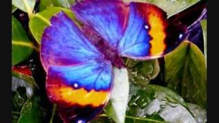Nu-NRG - Butterfly