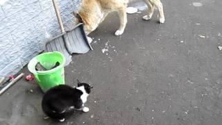 Кот против собаки/Cats & Dogs