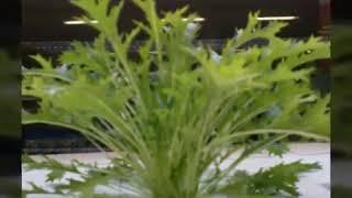 내가 기른 수경재배 식물