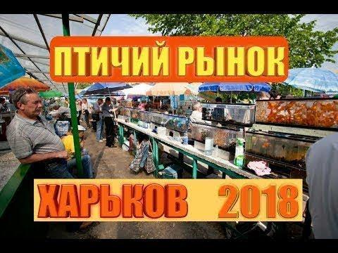 Птичий Рынок Харьков 2018 | КАКИЕ ЖИВОТНЫЕ И РАСТЕНИЯ ...