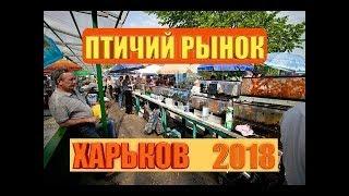 Птичий Рынок Харьков 2018 | КАКИЕ ЖИВОТНЫЕ И РАСТЕНИЯ ПРОДАЮТ!?