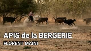 Florent MAINI et APIS: bientôt dispo pour stages Tri de bétail.