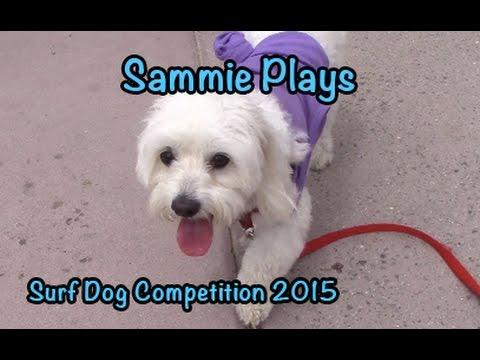 Surf Dog Competition 2015 SP #43