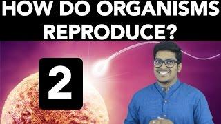 Biology: How do Organisms Reproduce? (Part 2) thumbnail