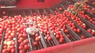 pomac Tomato harvesting machine