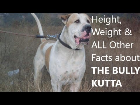 Bully kutta facts, height, weight, history, price in India