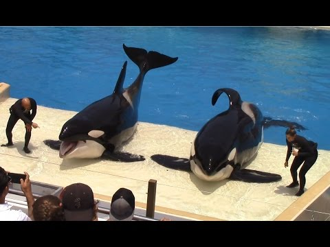 One Ocean (Full Show) at SeaWorld San Diego on 6-24-16