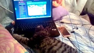 Просмотр видео.Про кота.