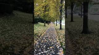 Payız menzeresi