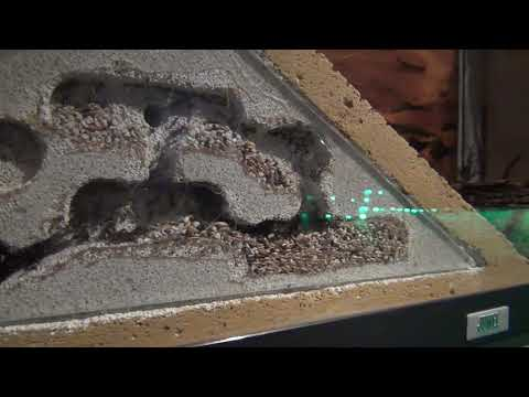 Pyres lustige Ameisen
