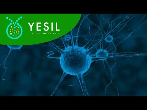 3D Neuron Cells Synaps Formation Animation ( Generation )
