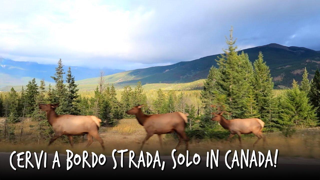 Sito di incontri Alberta Canada