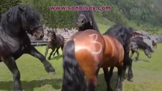 Dünyanın En Güzel Atları Bakın Ne Hale Getiriyorlar Vicdansızlık | www.sonbisey.com