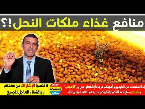 رقم على أي حال يطبخ ما هي فوائد غذاء ملكات النحل للرجال Myfirstdirectorship Com