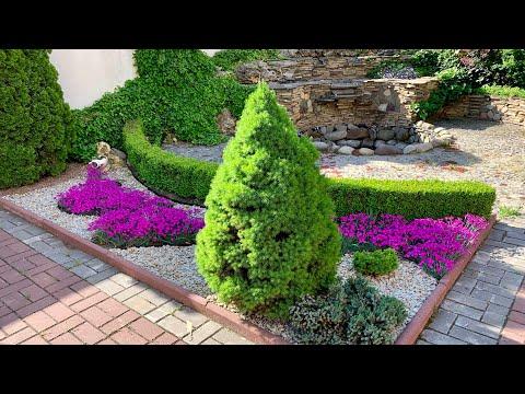 Сад весной: соседи хвойных, цветущие многолетники.