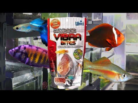 Hikari Vibra Bites Fish Food Review