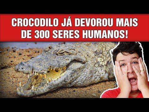 Gustave: O Lendário Crocodilo Gigante e Assassino de Burundi! ! (#539 - N.Assombradas)