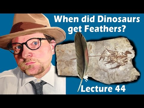 When did Dinosaurs get Feathers?