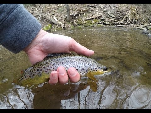 BEST TROUT FISHING OF 2018! Big Hunting And Little Hunting Creek Fly Fishing