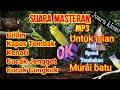 Suara Masteran Roll Speed Tembakan Untuk Isian Murai Batu Juara  Mp3 - Mp4 Download