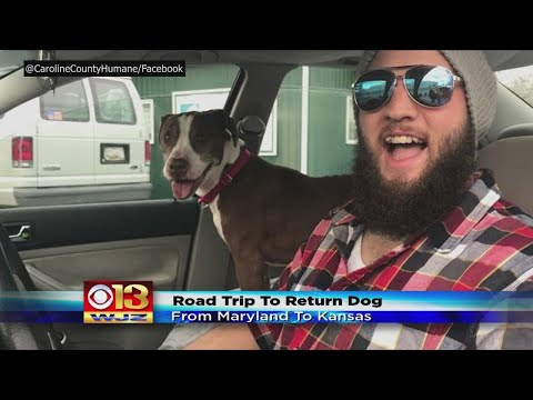 Maryland Man Volunteers To Roadtrip To Kansas To Return Abandoned Dog To Family