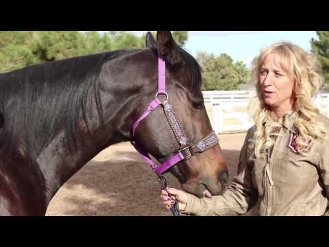 Mare Crush Monday with Amber Moore and Her Mare Paige - WNFR 2016